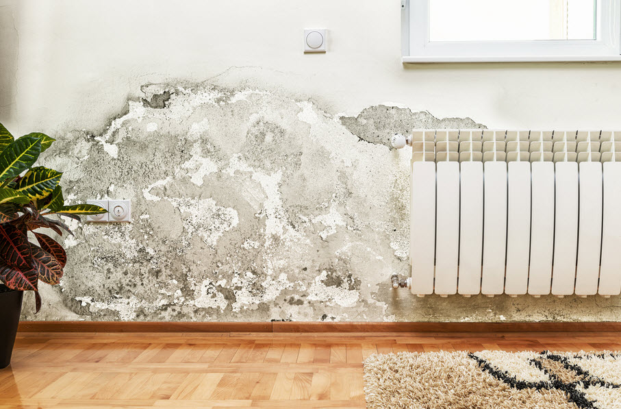 water damage mold on the wall